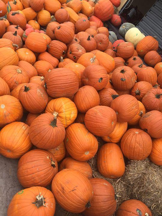 Pumpkin pumpkin - Painting and Photography by Julia Malphrus