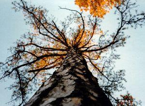 Tree on Fire Stockton University Art