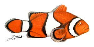 Clownfish Original Airbrush Artwork