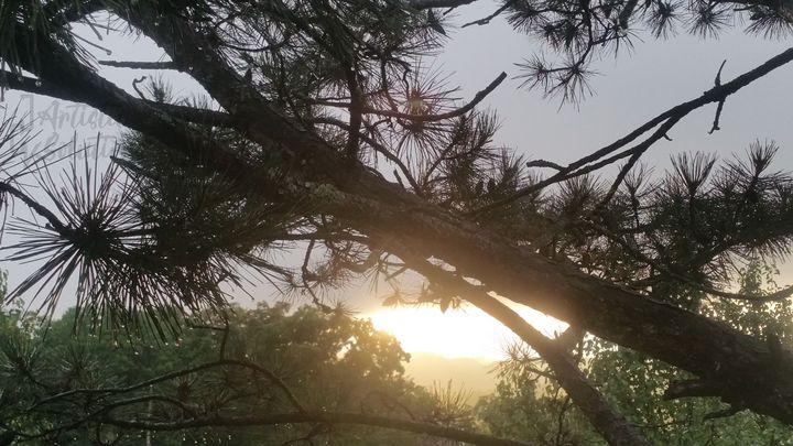 Sunset Pine - JCV Artistic Solutions