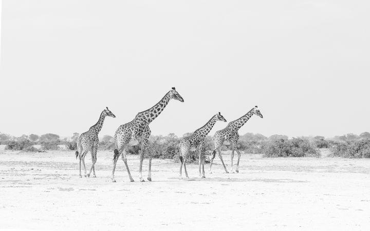 Journey of Giraffe - CJ Grobler