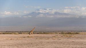 Kilimanjaro and Giraffe