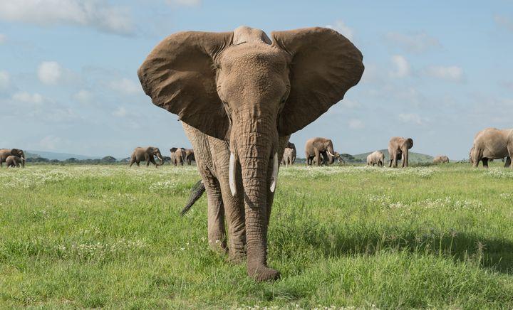 Amboseli - CJ Grobler