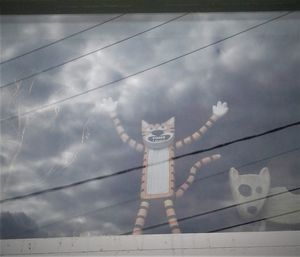 Scary weather cat