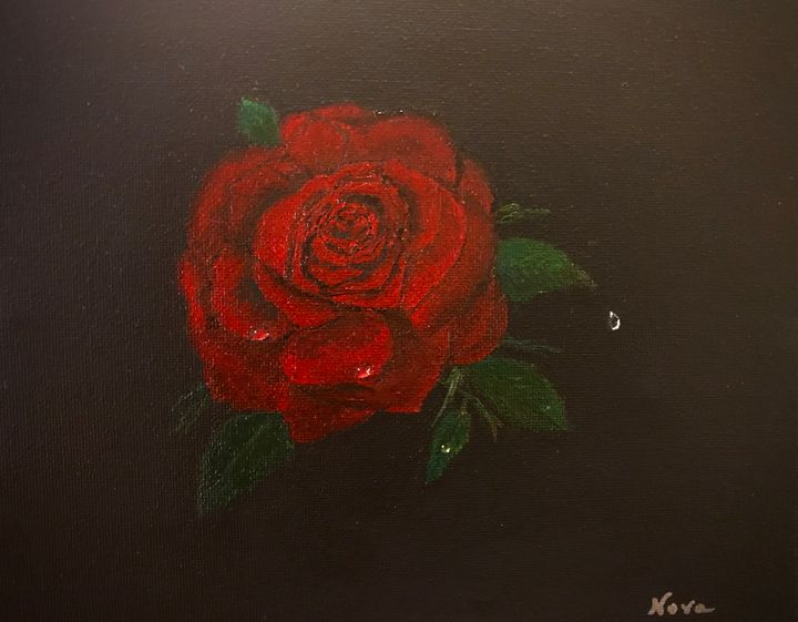 Raindrops On A Red Rose - Arts By Nova