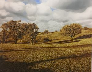 landscape 1 - BB