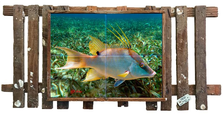 Hogfish in the Grass - Lobster Trap Art