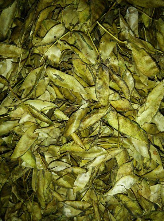 bean extract - mukuldeep maiti