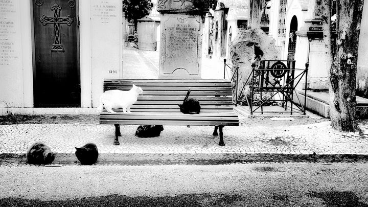 A place of many cats - Christopher Maxum Photography