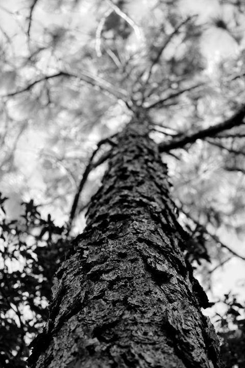 A Squirrel's View - Snap Shots By Sarah