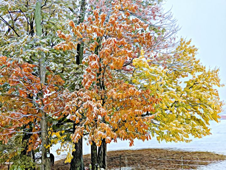 3 Color Snow Fall in Tennessee - Wilson Colfax