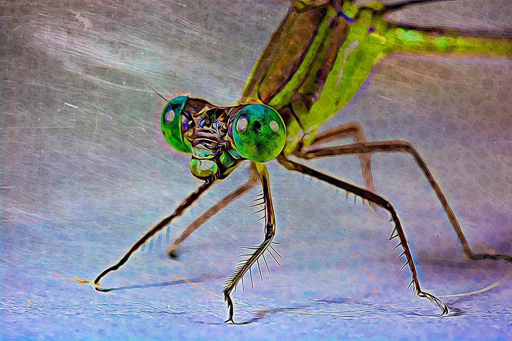 Trippy Dragonfly - Wilson Colfax