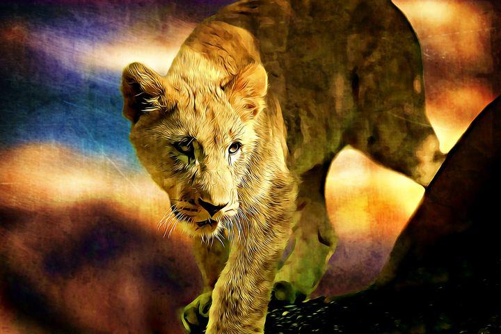 Lion Cub - Wilson Colfax