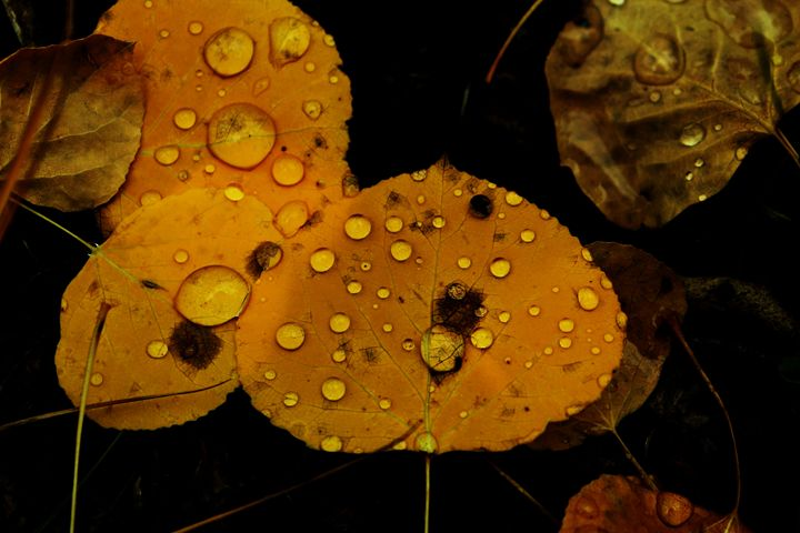 fresh rain in the fall forest - mindful moments