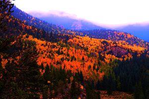 Misty Fall Sunset
