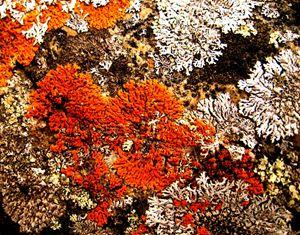 Moss upon Granite