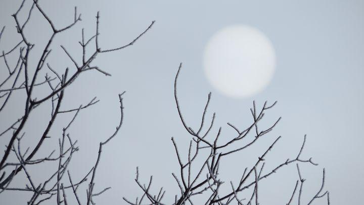 Frosty Trees - Muck-About Fine Art