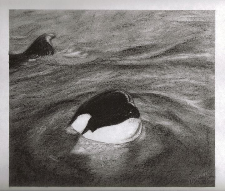 Killer Whale - Muck-About Fine Art