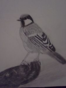 bird - Beauty876