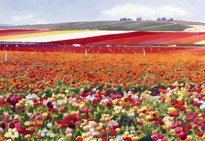 Ranunculi in Carlsbad - Mary Helmreich California Watercolors