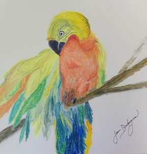 Pretty Bird - Welcome to Bentivegna Art