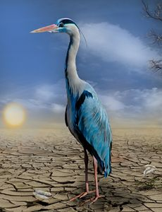 Parched Heron