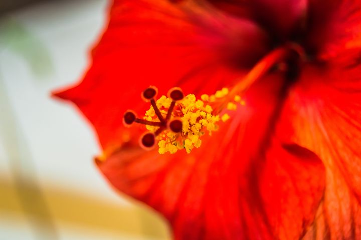 Red Tropical Flower - MJDs Photography