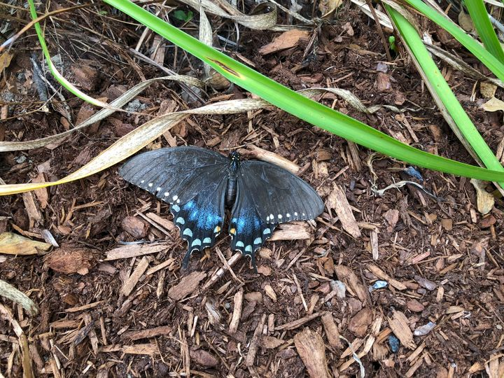 the blue butterfly - Mom's Gallery