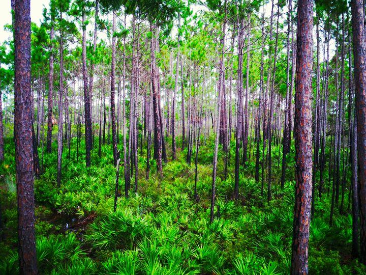 Infinite Forest - Austin McDougal Art