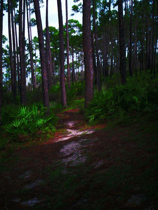Infinite Forest - 2 - Austin McDougal Art