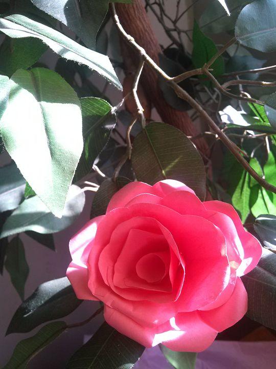Paper Rose Petals - In My Shooz