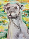 Watercolor of a Boxer