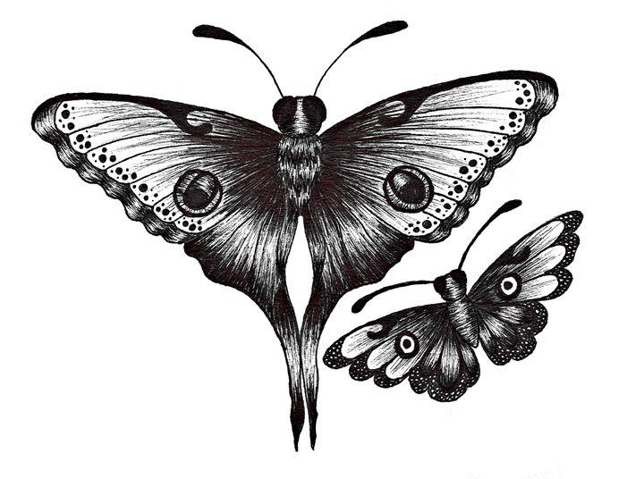 Moths - The Daisy Chain