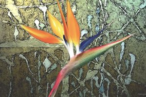 Bird of Paradise flower - Tony Walling Creative Arts