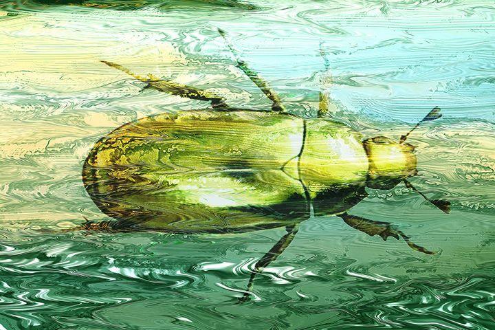 \golden Scarab beetle swimming - Tony Walling Creative Arts