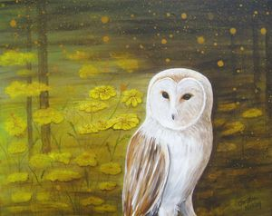 Meadow Barn Owl
