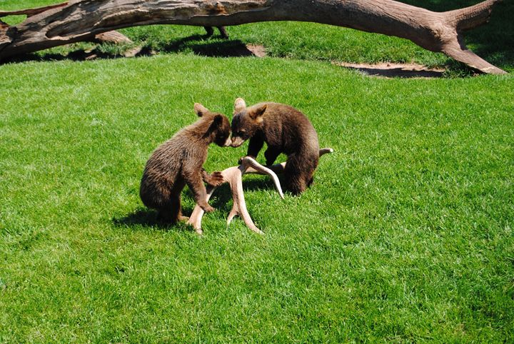 Kissing Bears - Bex Plus