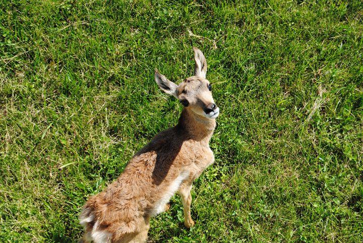 Baby Elk - Bex Plus