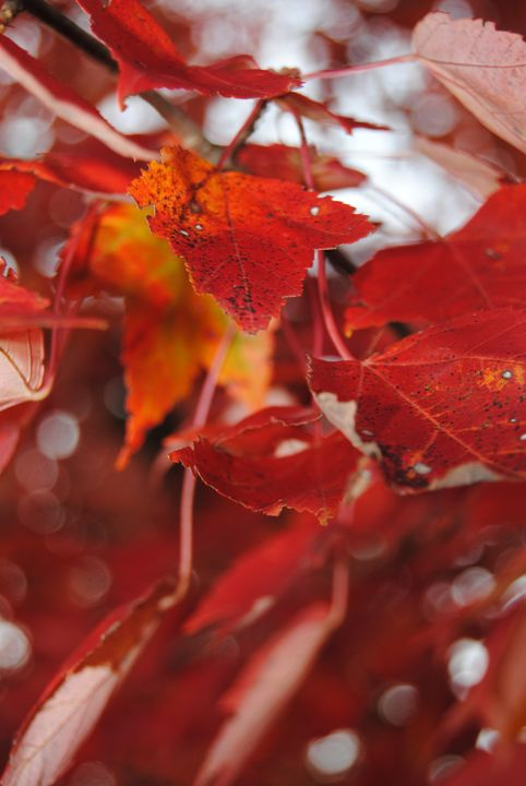 Vibrant Carmine Leaves - Bex Plus