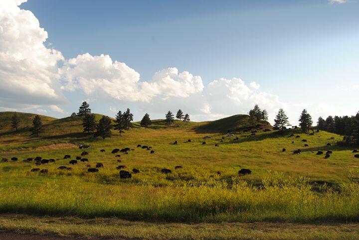 Hills Of Buffalo - Bex Plus