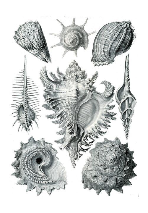 sea shells - NatalyArt