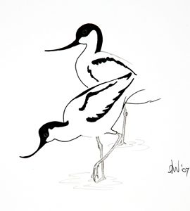 Avocets - simply angela