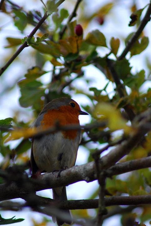 Robin - Adam J Richards Photography