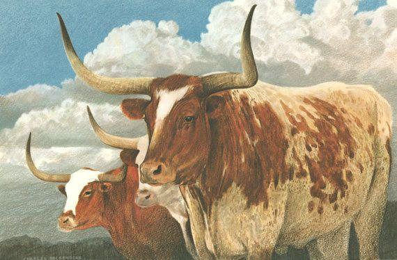 Texas Longhorns | Texas Art Prints - Beckendorf Texas Art Gallery