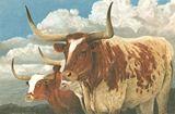 Texas Longhorns | Texas Art Prints