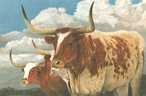 Texas Longhorns | Texas Art Prints