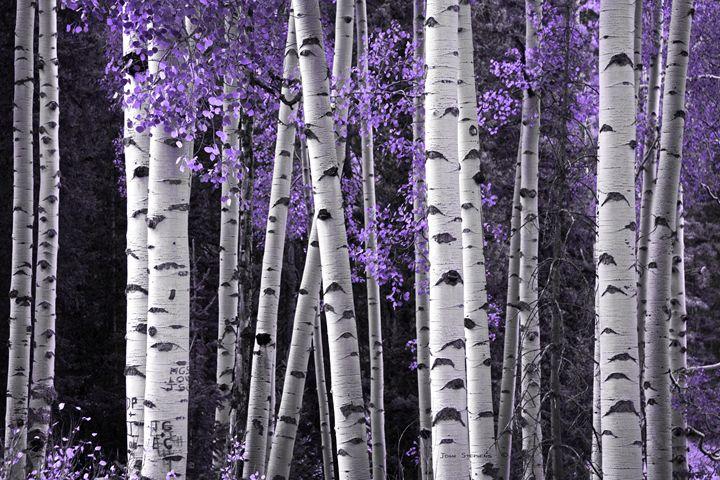 Aspen Trunks Lavender Leaves - John Stephens