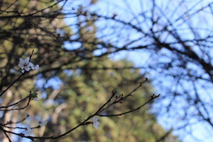 Telarañas de árbol - Lemo