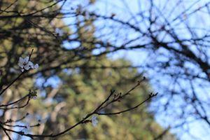 Telarañas de árbol