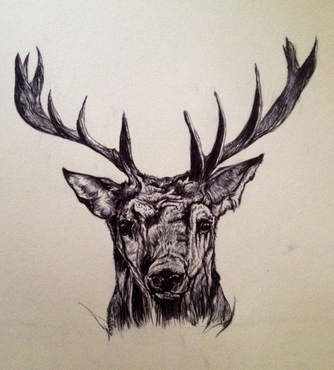 Deerhead - Elise Pearce